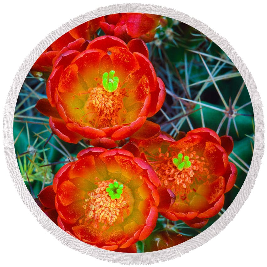 America Round Beach Towel featuring the photograph Claret Cup by Inge Johnsson