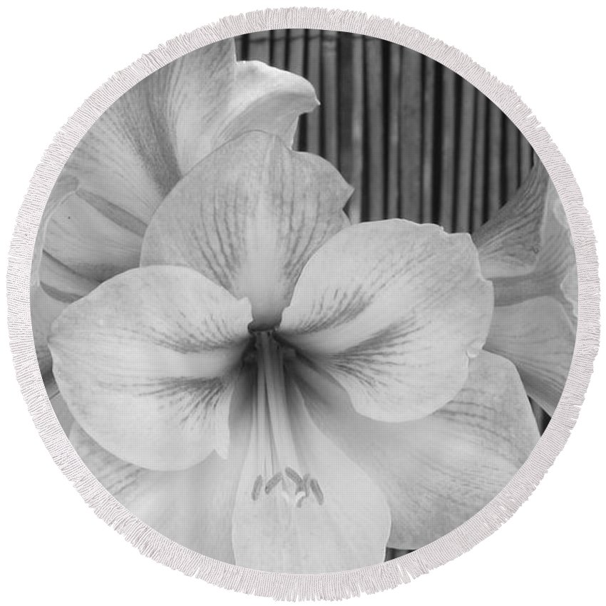 Patzer Round Beach Towel featuring the photograph Classic Lilies by Greg Patzer