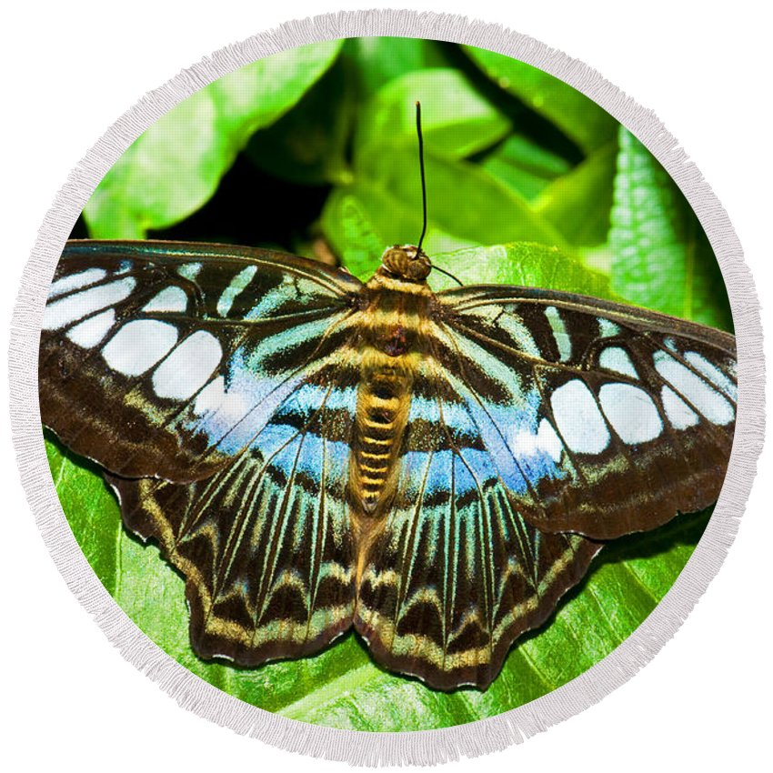 Nature Round Beach Towel featuring the photograph Clipper Butterfly by Millard H. Sharp