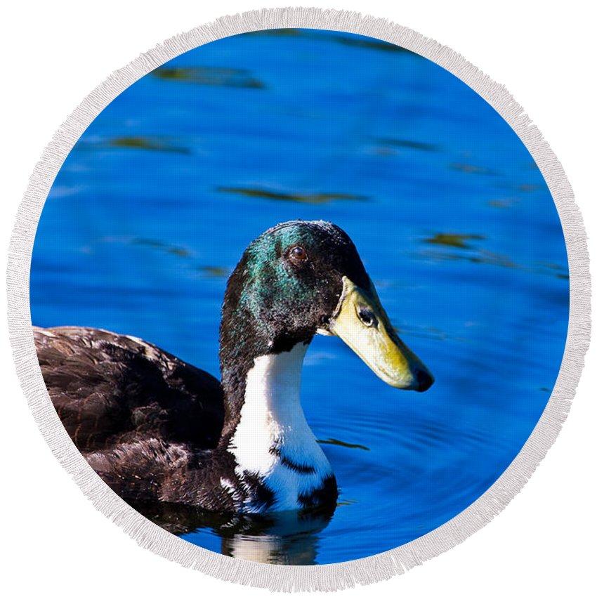 Duck Round Beach Towel featuring the photograph Close Up Duck by Darren Burton