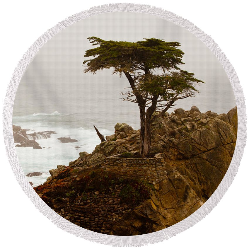 2012 Round Beach Towel featuring the photograph Coastline Cypress by Melinda Ledsome