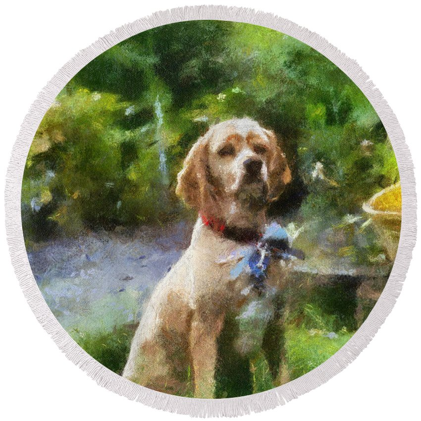 Spaniel Round Beach Towel featuring the photograph Cocker Spaniel Outside 02 by Thomas Woolworth