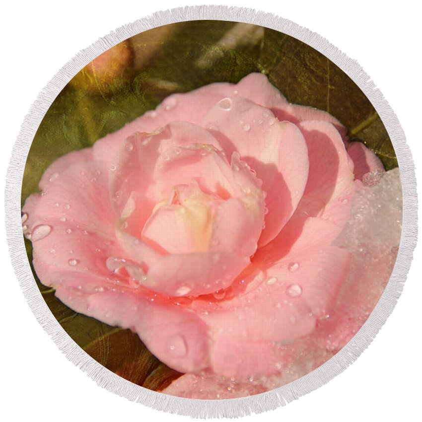 (camellia Sasanqua) Round Beach Towel featuring the photograph Cold Swirled Camellia by Jemmy Archer