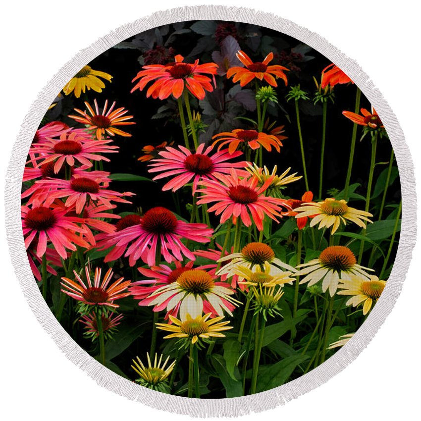 Coneflower Round Beach Towel featuring the photograph Coloratura by Barbara McMahon