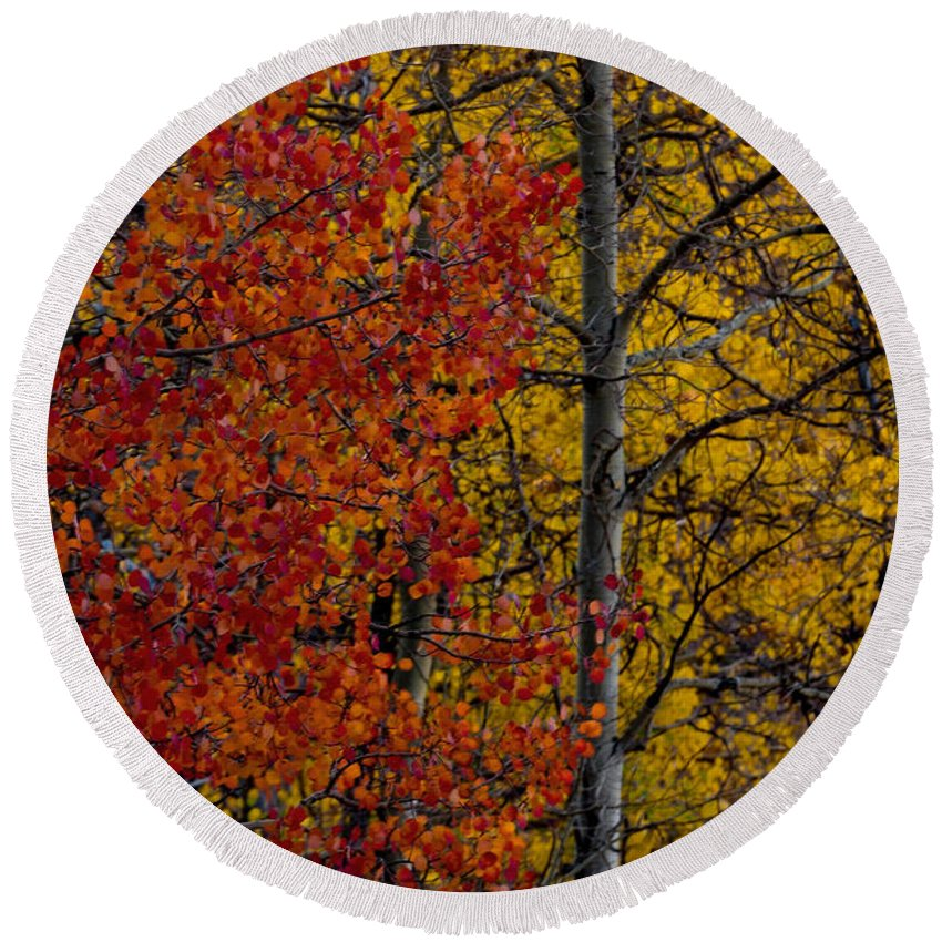 Autumn Round Beach Towel featuring the photograph Color Changes by Ernie Echols