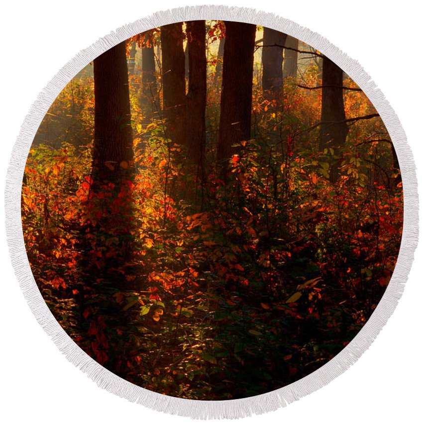 2008 Round Beach Towel featuring the photograph Color On The Forest Floor by Robert Charity