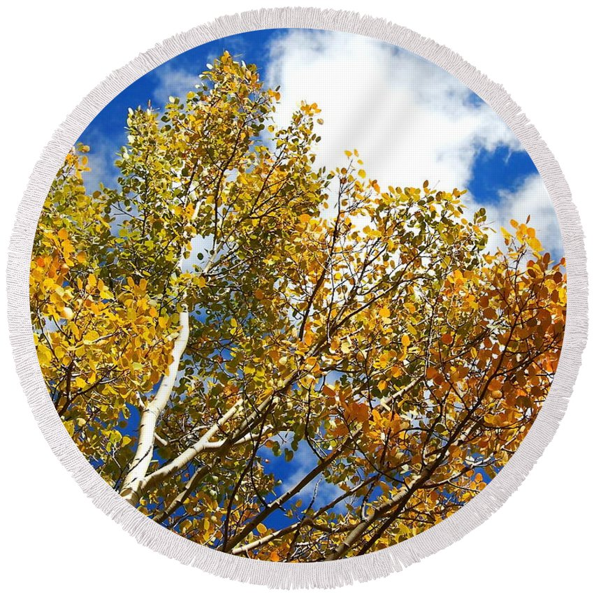 Aspen Round Beach Towel featuring the photograph Colorado Aspens And Blue Skies by Amy McDaniel