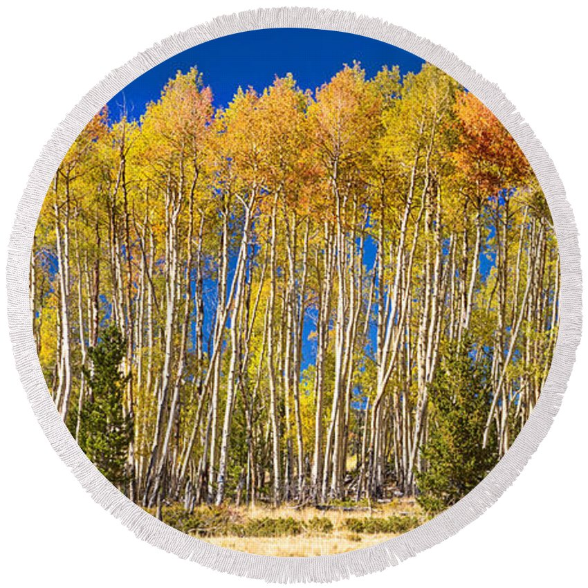Autumn Round Beach Towel featuring the photograph Colorful Aspen Panorama by James BO Insogna