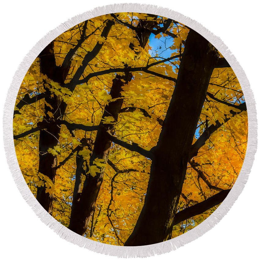 Autumn Color Round Beach Towel featuring the photograph Colorful Canopy by Albert Seger