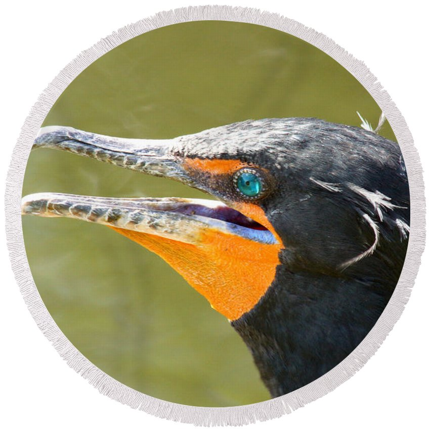 Cormorant Round Beach Towel featuring the photograph Colorful Double-crested Cormorant by Larry Allan