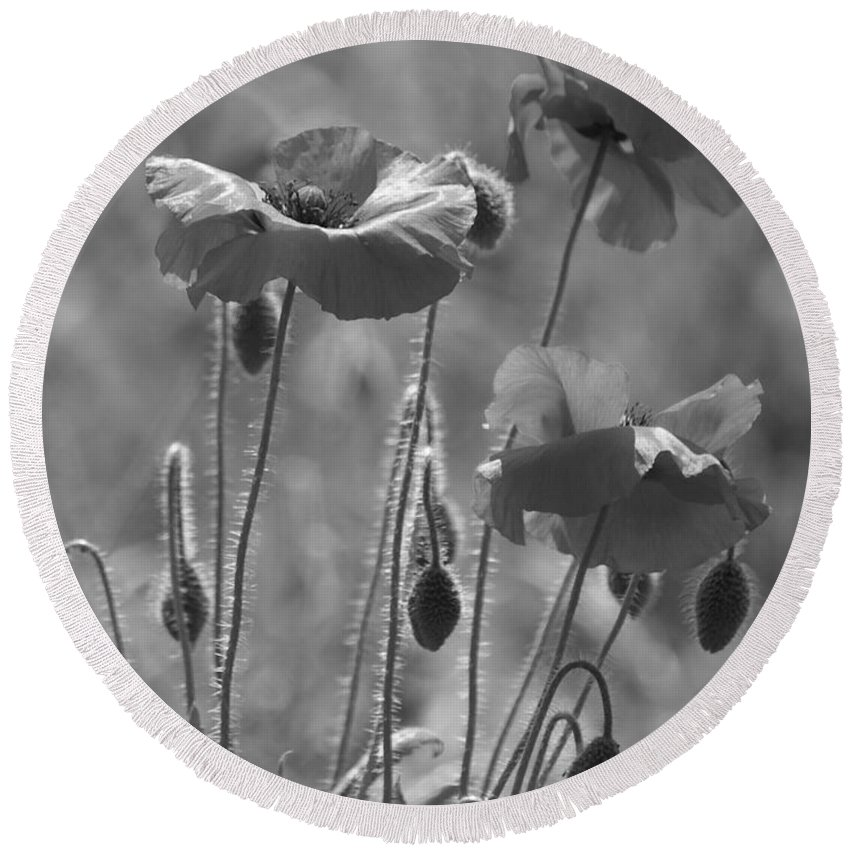 Poppies Round Beach Towel featuring the photograph Colour Blind Poppies 1 by Carol Lynch