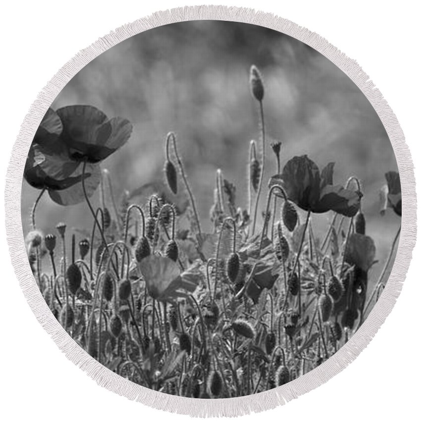 Poppies Round Beach Towel featuring the photograph Colour Blind Poppies 2 by Carol Lynch