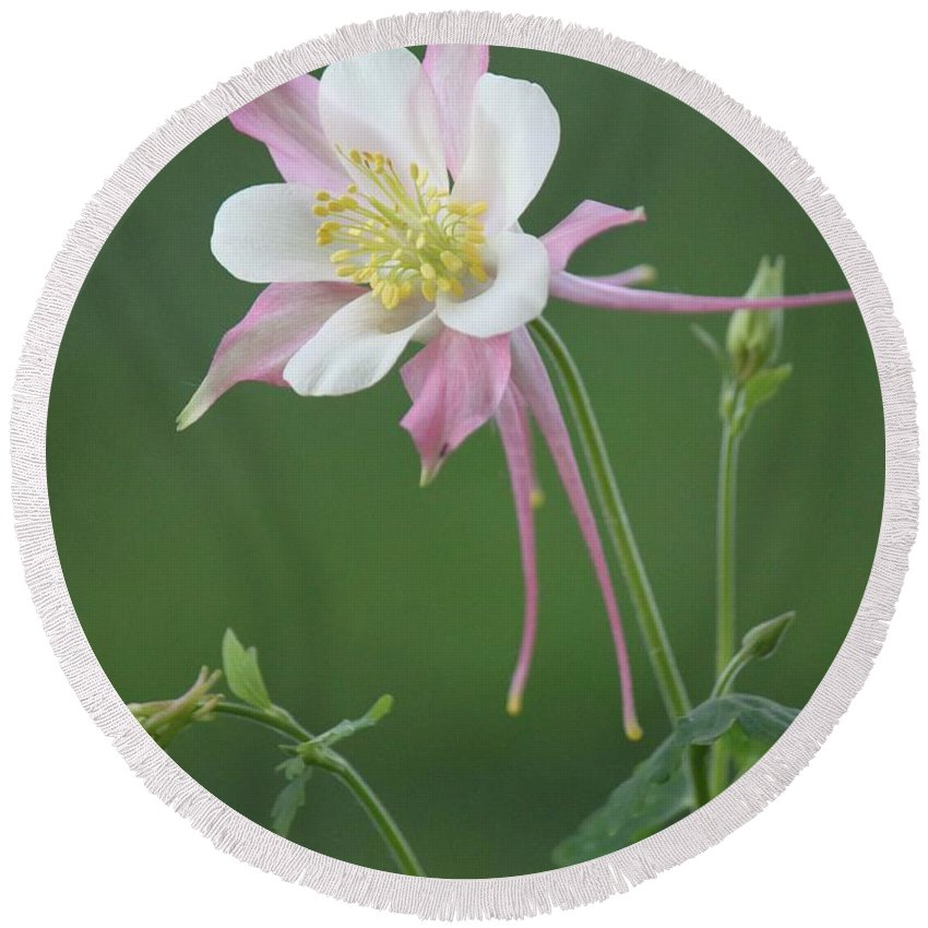 Flower Round Beach Towel featuring the photograph Pink Columbine by Linda Richardson