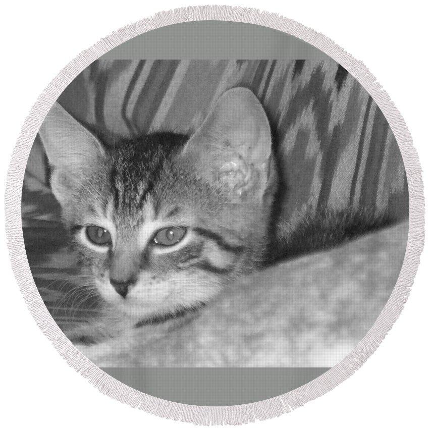 Kitten Round Beach Towel featuring the photograph Comfy Kitten by Pharris Art