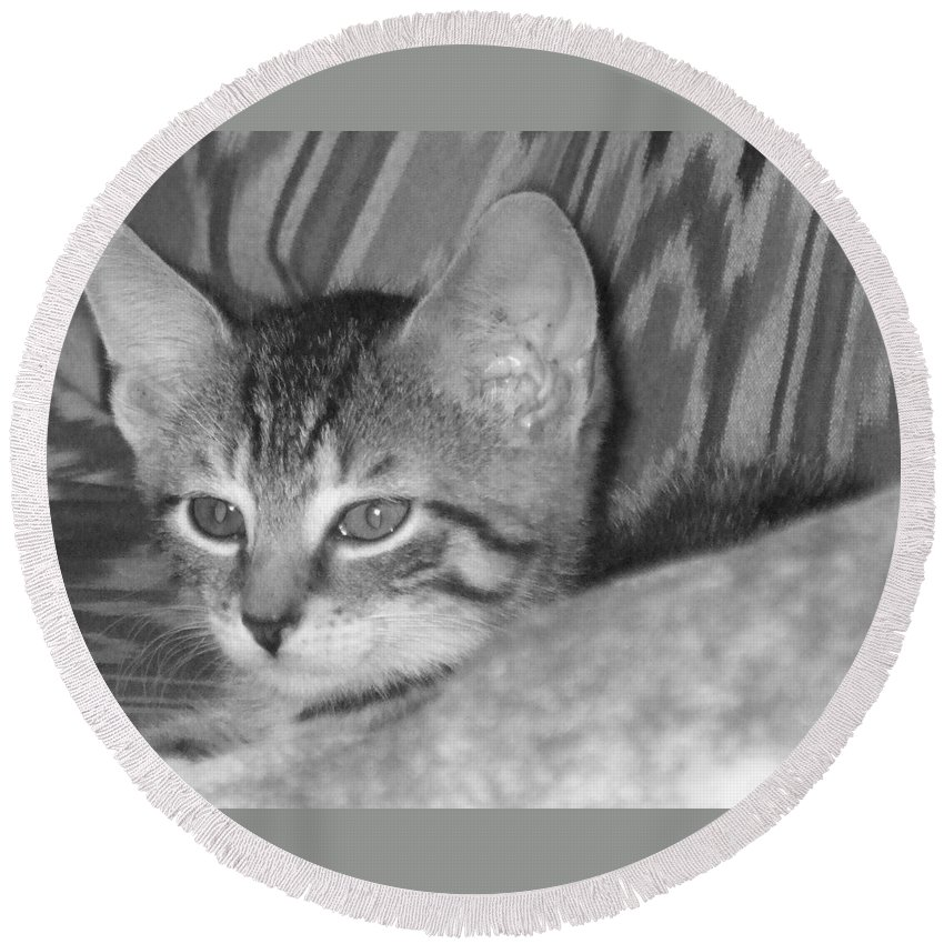 Kitten Round Beach Towel featuring the photograph Comfy Kitten by Pharris Art