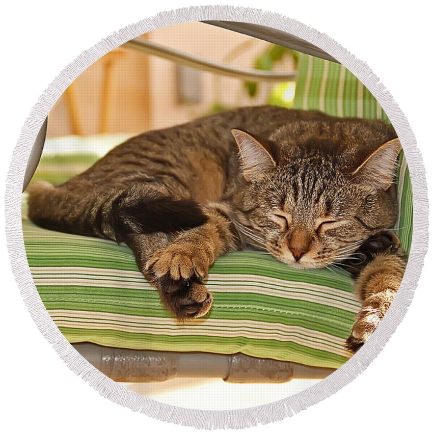 Cat Round Beach Towel featuring the photograph Comfy Kitty by Aimee L Maher ALM GALLERY
