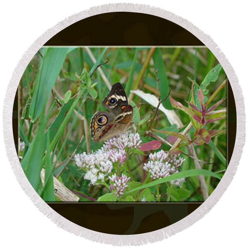 Butterfly Round Beach Towel featuring the photograph Common Buckeye Butterfly - Junonia Coenia by Mother Nature