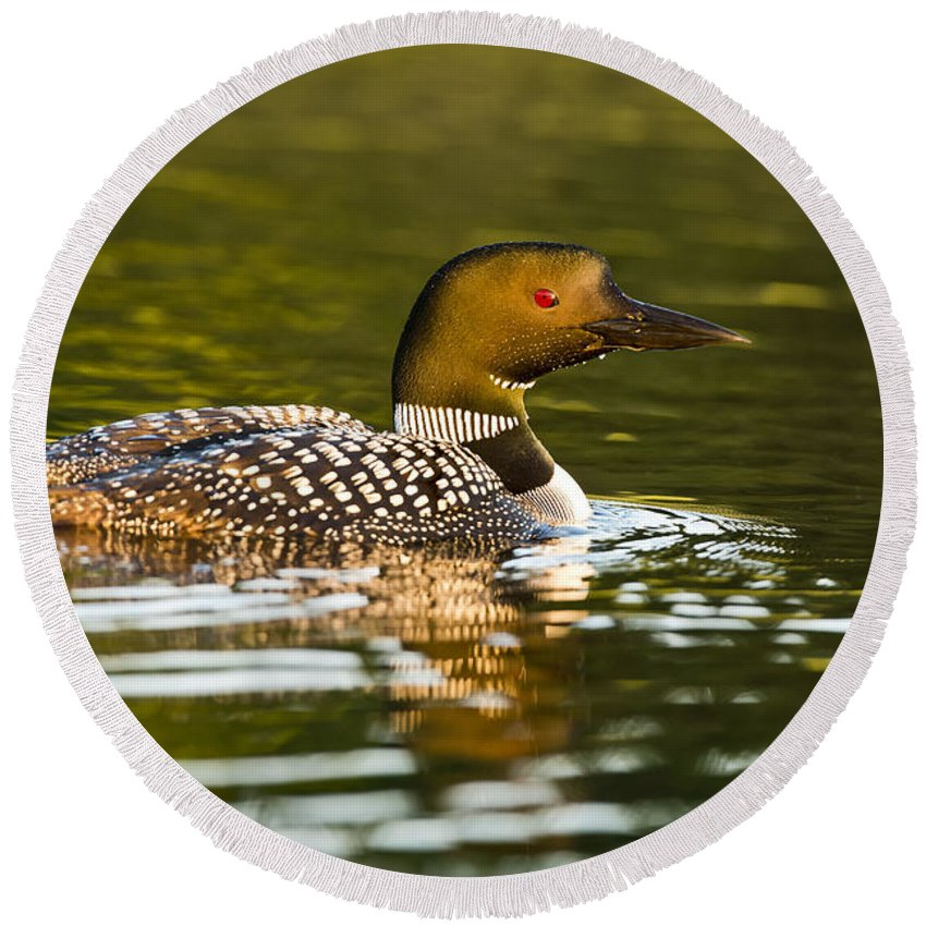 Common Loon Round Beach Towel featuring the photograph Common Loon Pictures 145 by World Wildlife Photography