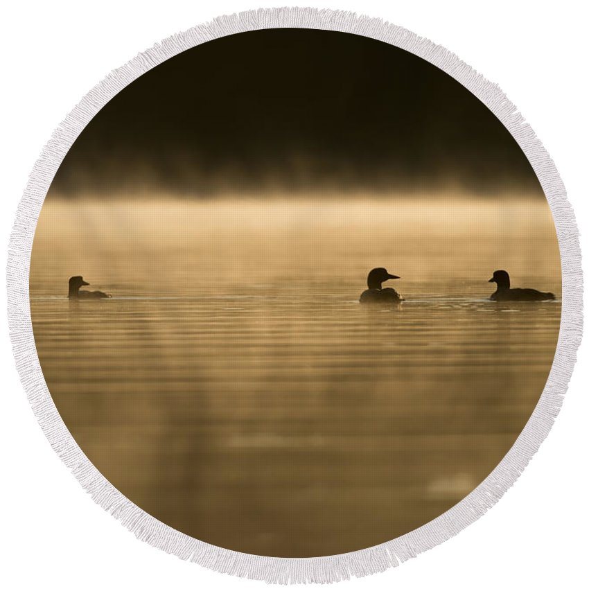 Common Loon Round Beach Towel featuring the photograph Common Loon Pictures 148 by World Wildlife Photography