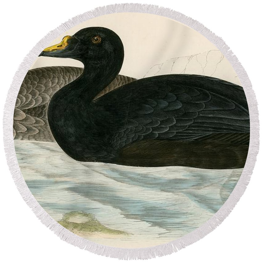 Duck Round Beach Towel featuring the painting Common Scoter by Beverley R Morris