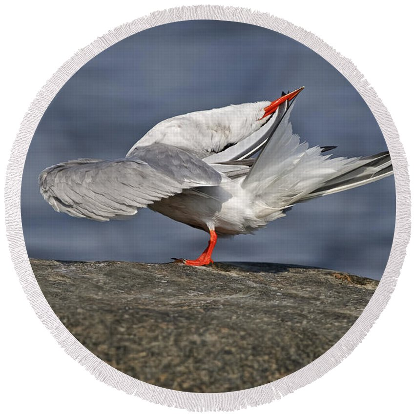 Common Tern Round Beach Towel featuring the photograph Common Tern Pictures 51 by World Wildlife Photography