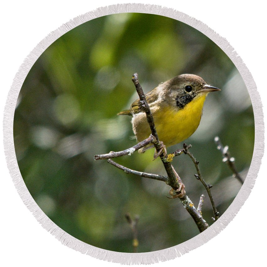 Common Yellowthroat Round Beach Towel featuring the photograph Common Yellowthroat Warbler by Cheryl Baxter