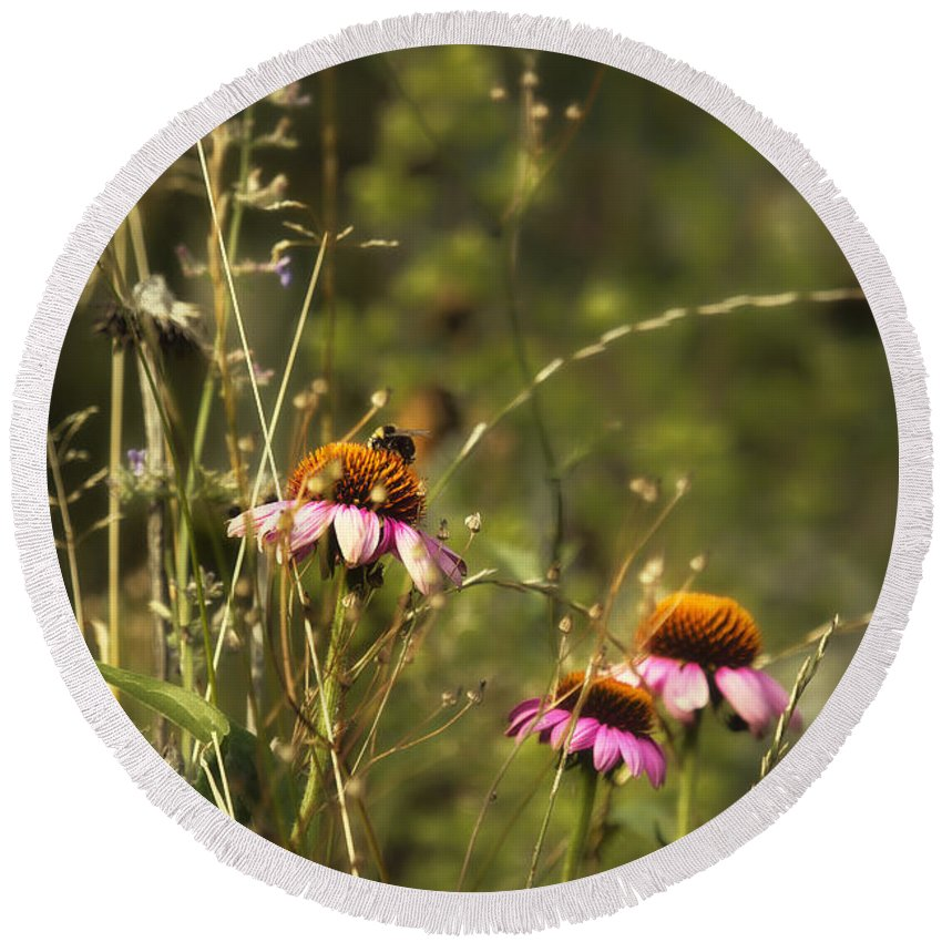Flower Round Beach Towel featuring the photograph Coneflowers Weeds And Bee by Belinda Greb