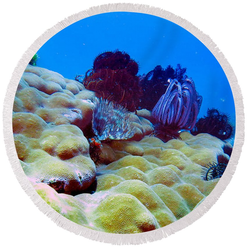 Healthy Corals Round Beach Towel featuring the photograph Corals Underwater by Paul Ranky