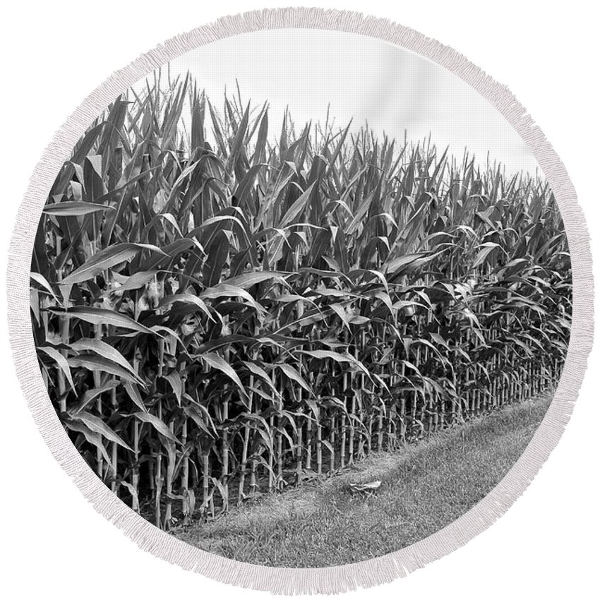 Cornfield Round Beach Towel featuring the photograph Cornfield Black And White by Frozen in Time Fine Art Photography