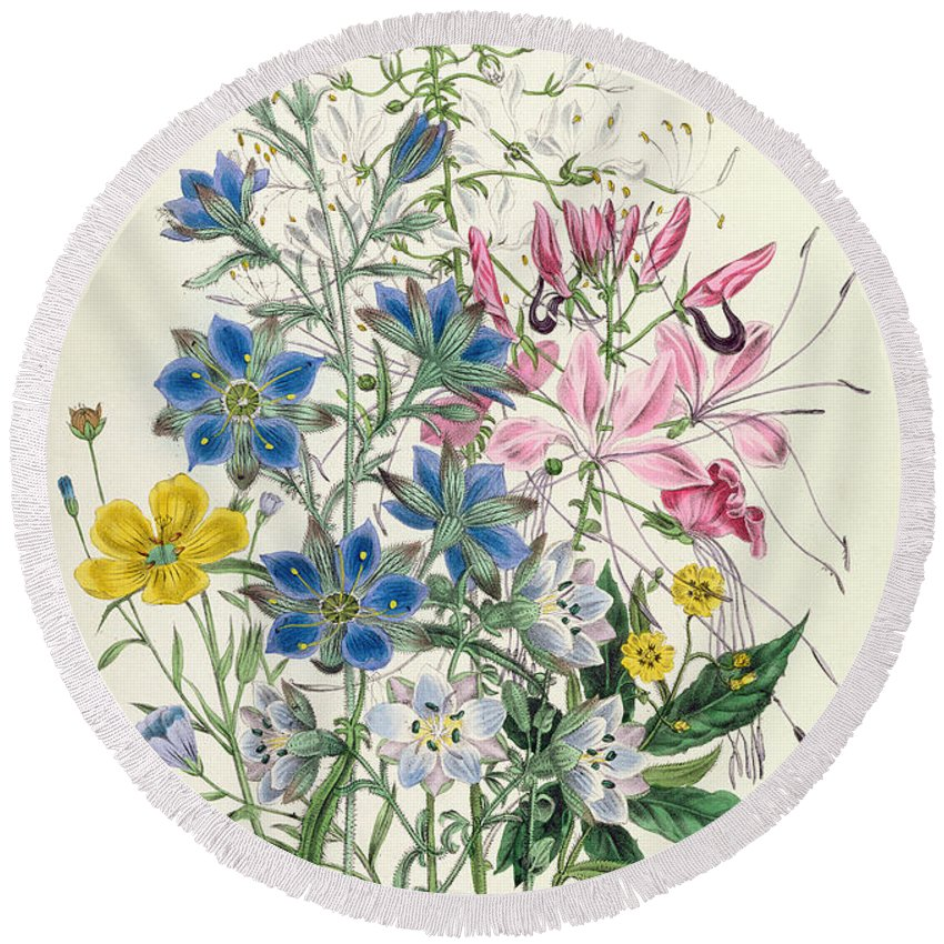 Flowers Round Beach Towel featuring the painting Cornflower by Jane Loudon