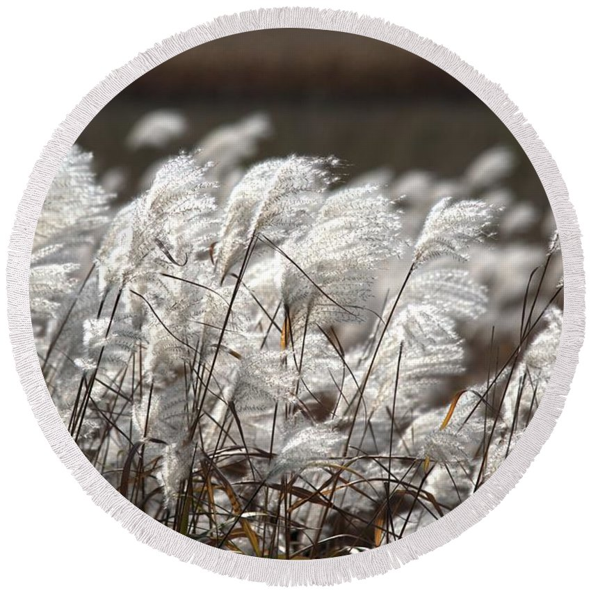Beige Round Beach Towel featuring the photograph Cortaderia Selloana 2 by Bonfire Photography