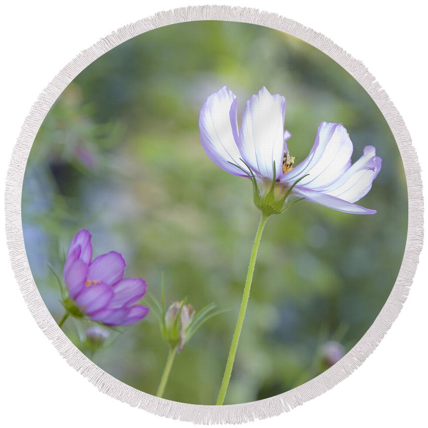 Floral Round Beach Towel featuring the photograph Cosmo Lite by Theresa Tahara