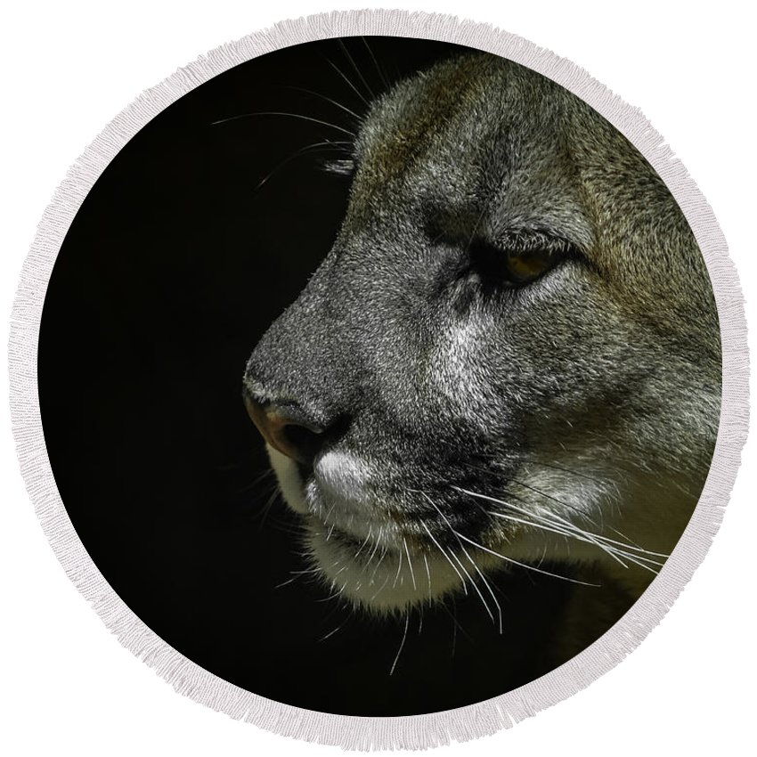 Mountain Lion Round Beach Towel featuring the photograph Cougar by Ernie Echols