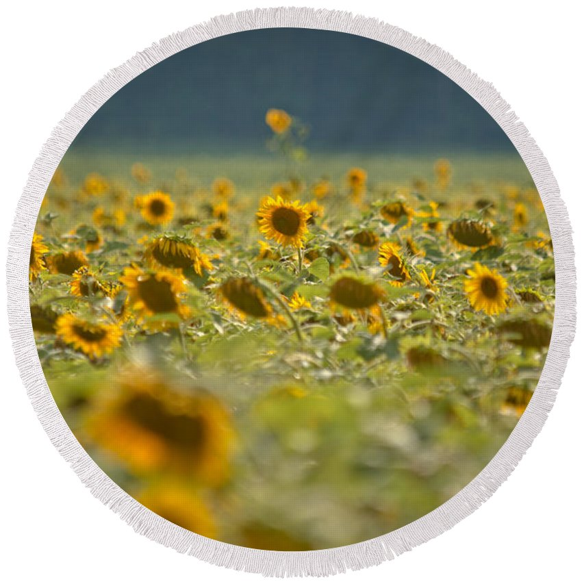 Sunflowers Round Beach Towel featuring the photograph Country Sunflowers by Cheryl Baxter