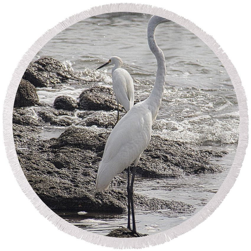 Birds Round Beach Towel featuring the photograph Cousins by Bob Hislop