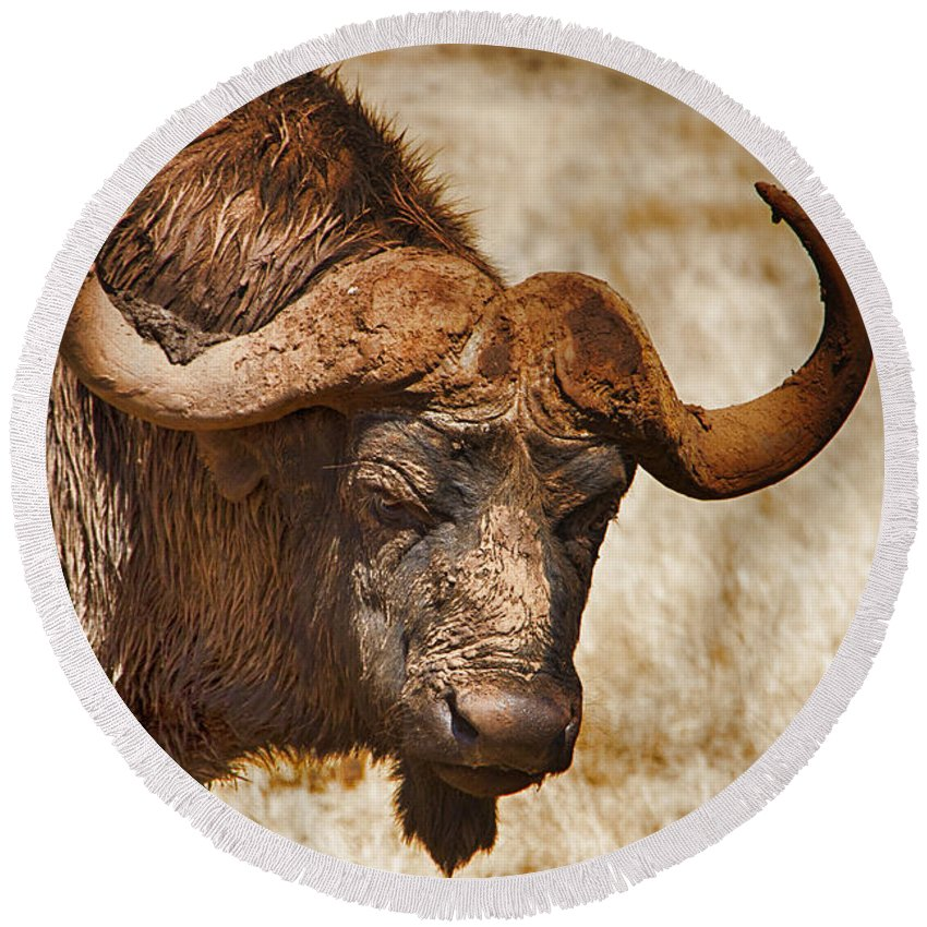 African Buffalo Round Beach Towel featuring the photograph Covered In Mud V3 by Douglas Barnard