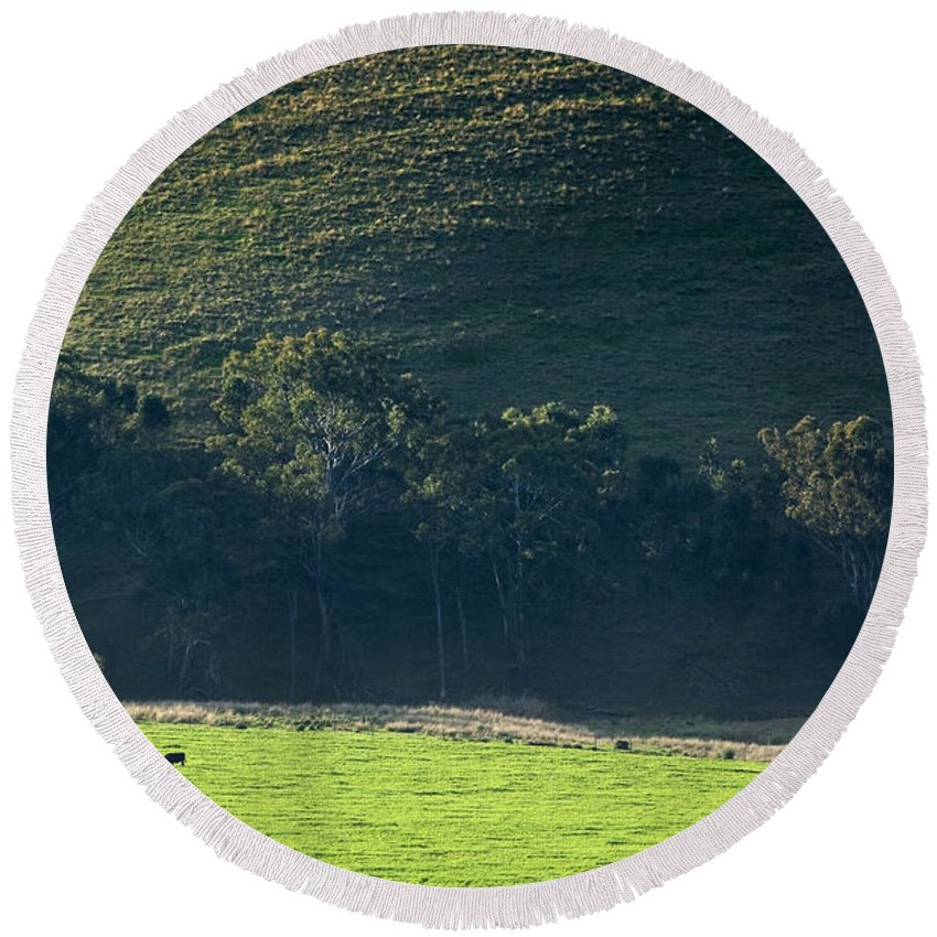 Agriculture Round Beach Towel featuring the photograph Cow In Field by Tim Hester