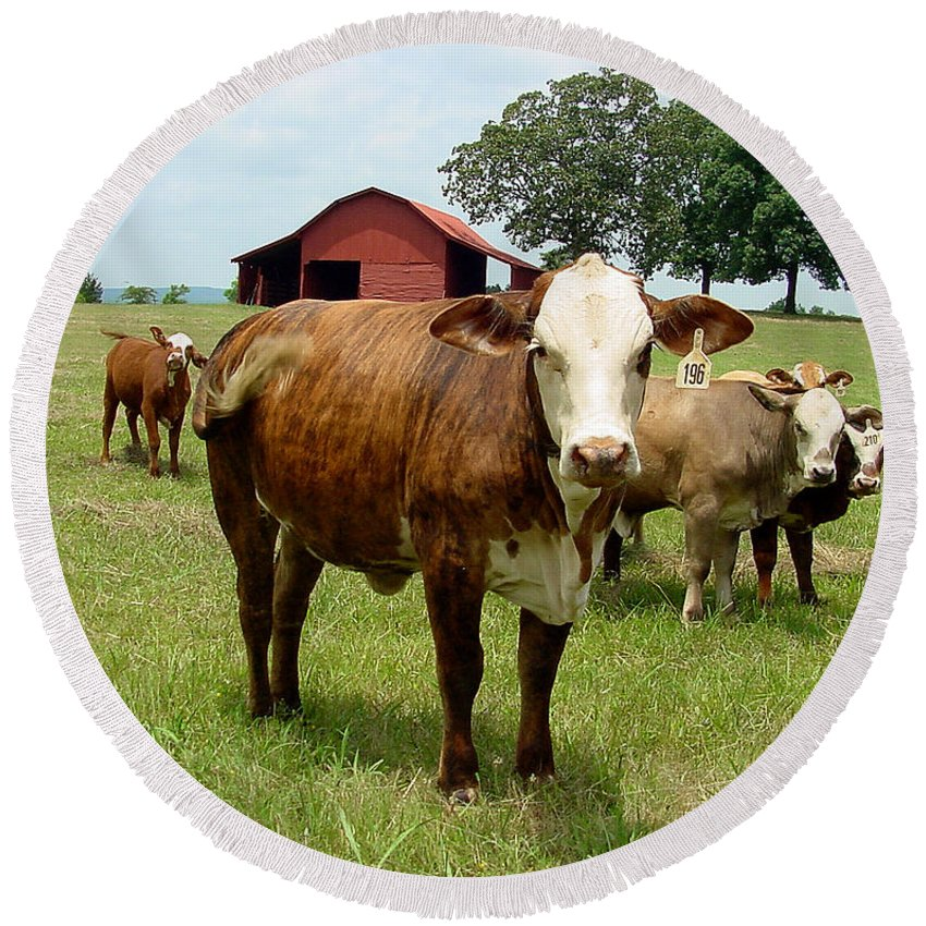 Cow Round Beach Towel featuring the photograph Cows8945 by Gary Gingrich Galleries