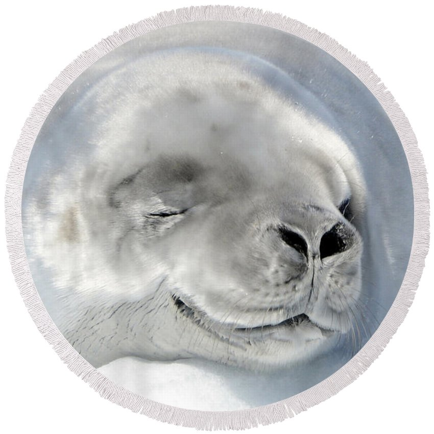 Seal Round Beach Towel featuring the photograph Crabeater Seal by Jennifer LaBouff