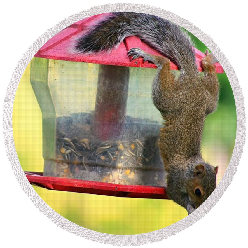 Squirrel Round Beach Towel featuring the photograph Critter Acrobat by Amanda Stadther