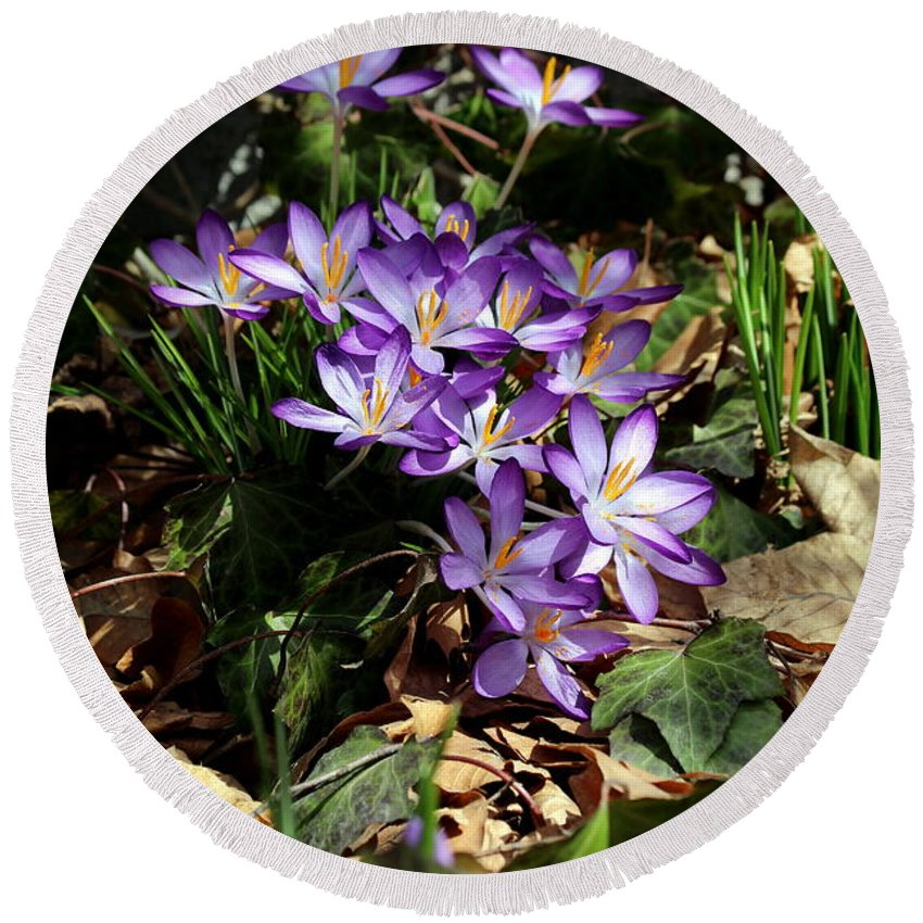 Crocus Round Beach Towel featuring the photograph Crocus Amongst The Leaf Litter by Kenny Glotfelty