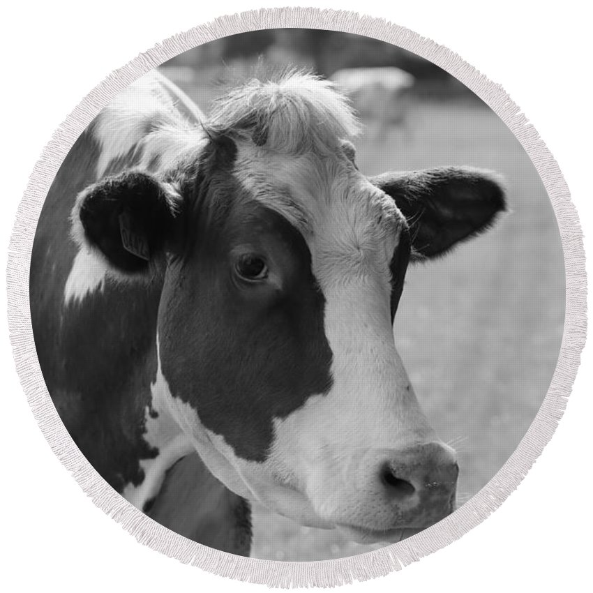 Cow Round Beach Towel featuring the photograph Cute Cow - Black And White by Carol Groenen