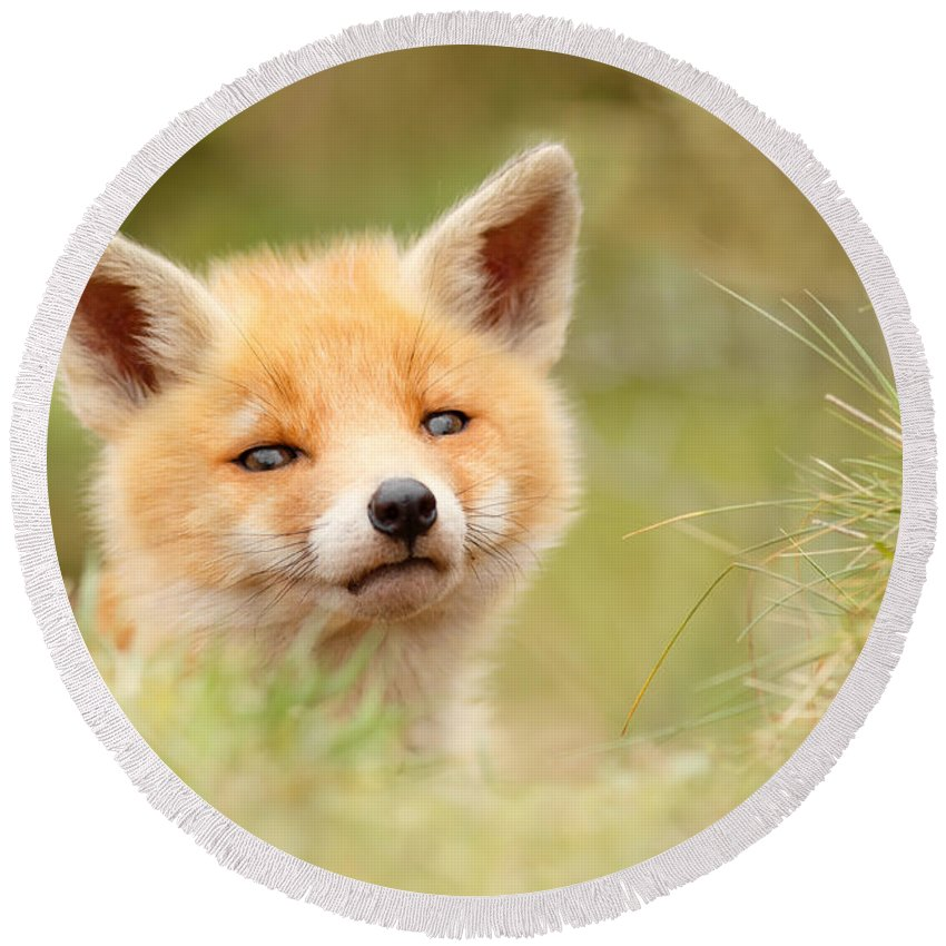 Camouflage Round Beach Towel featuring the photograph Cutie Face _red Fox Kit by Roeselien Raimond