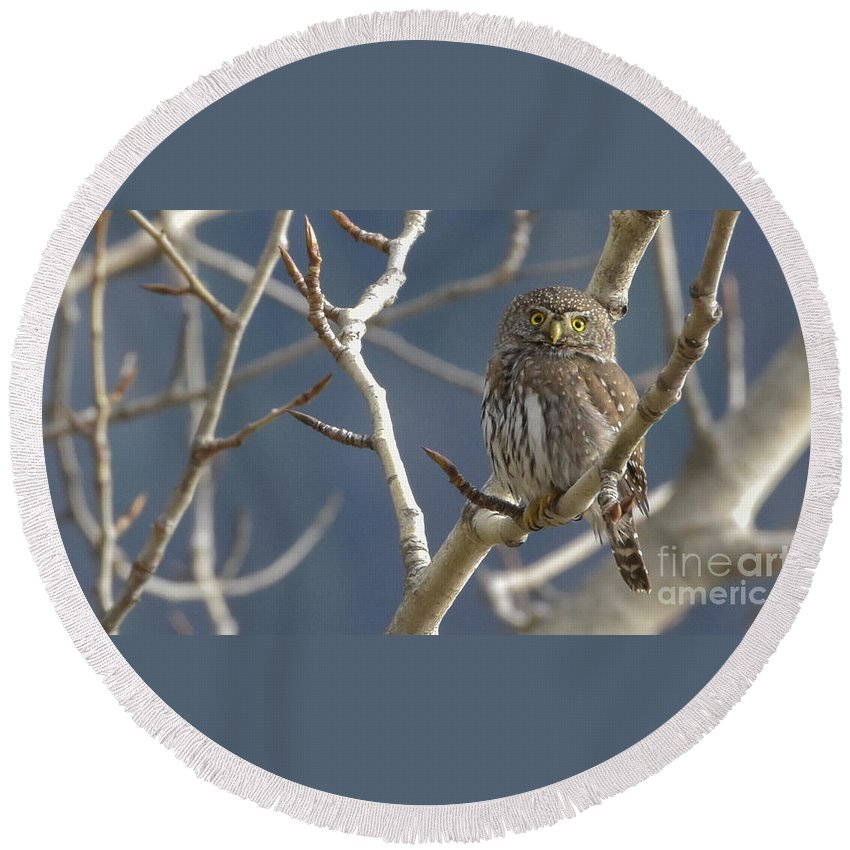 Northern Pygmy Owl Round Beach Towel featuring the photograph Who Are You? Hoot Hoot Hoot Hoot by Joy McAdams