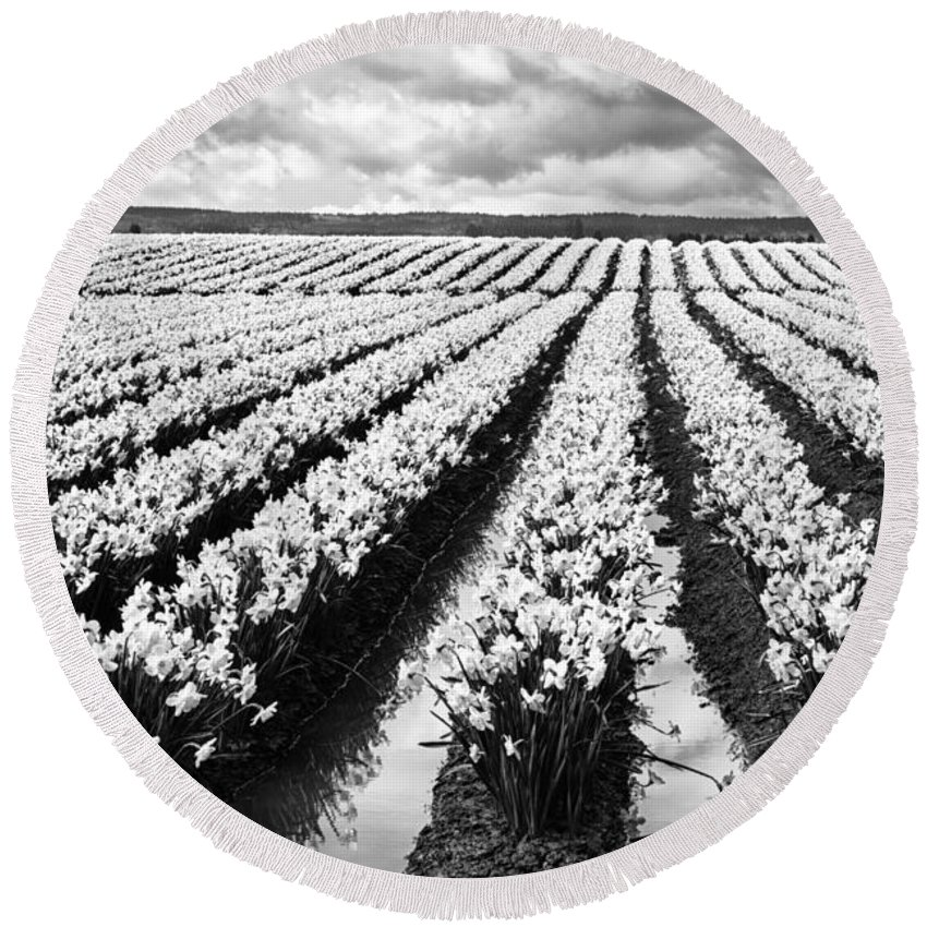 Black And White Round Beach Towel featuring the photograph Daffodil Fields II by Mark Kiver