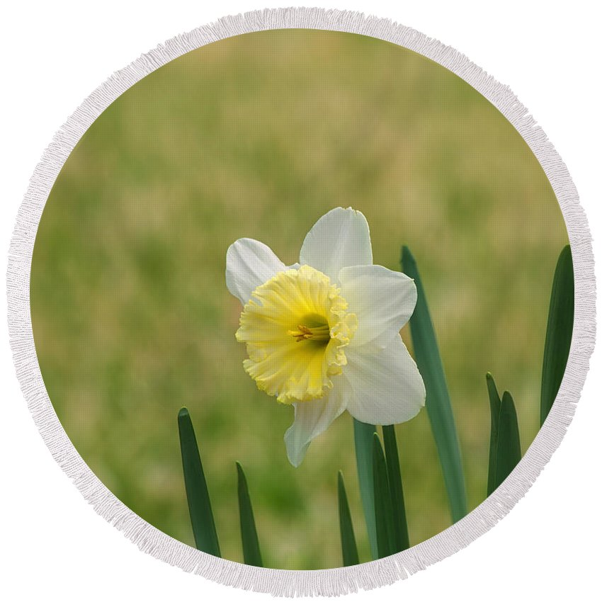 Daffodil Flower Round Beach Towel featuring the photograph Daffodil Flower by Kim Hojnacki