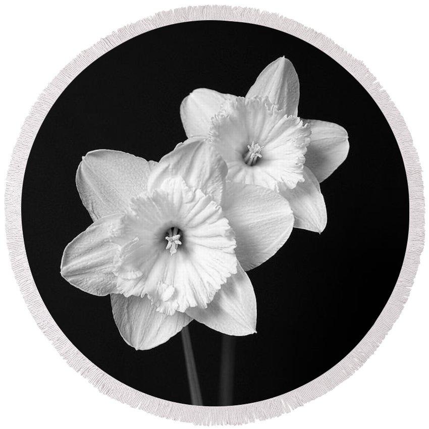 Daffodil flowers black and white round beach towel for sale by daffodil round beach towel featuring the photograph daffodil flowers black and white by jennie marie schell mightylinksfo