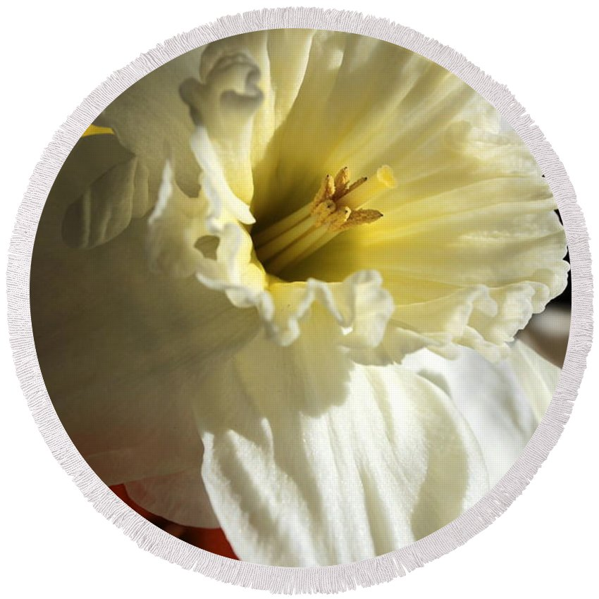 Narcissus Round Beach Towel featuring the photograph Daffodil Still Life by Kenny Glotfelty