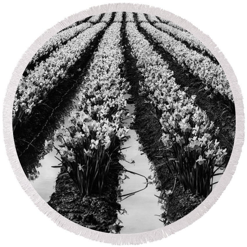 Black And White Round Beach Towel featuring the photograph Daffodils Forever by Mark Kiver