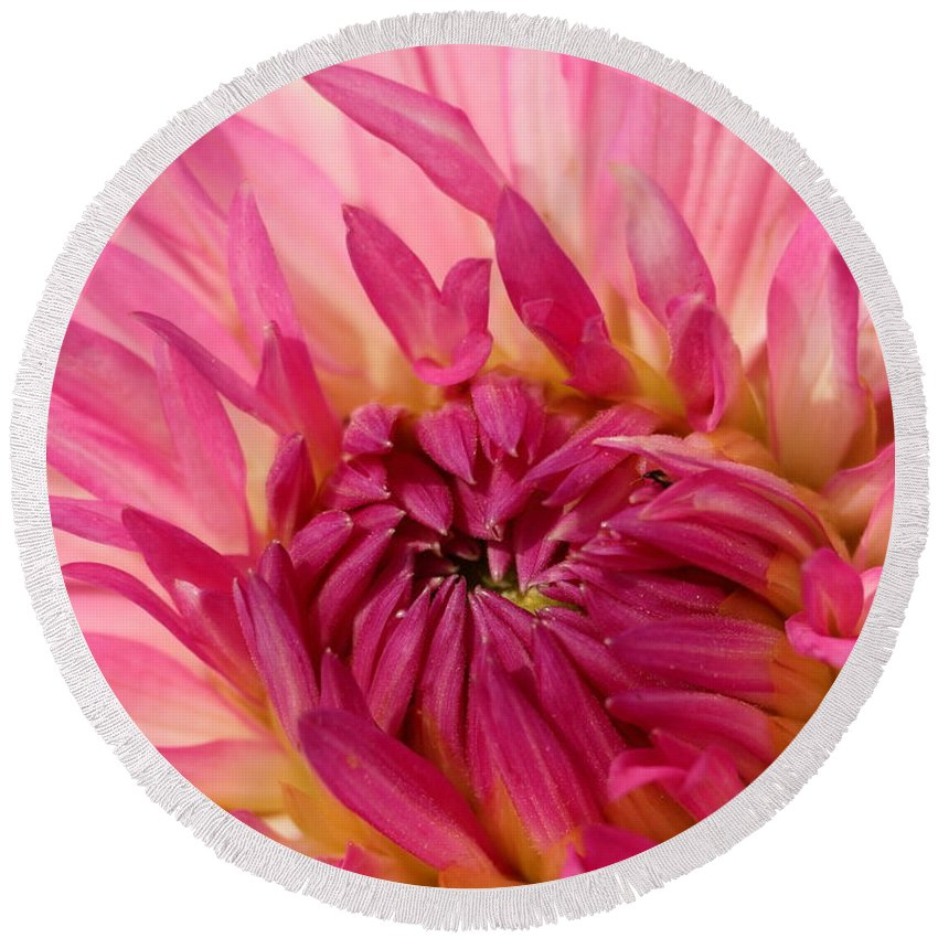 Flower Round Beach Towel featuring the photograph Dahlia 2am-104251 by Andrew McInnes